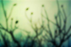 Winter Twig Blur