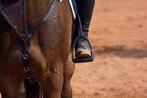 Jockey Riding Horse #2