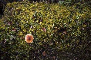 Mushroom in Green