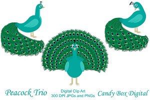 Peacock Trio Clip Art