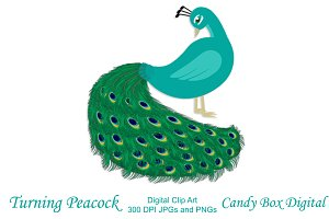 Turning Peacock Clip Art