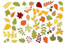 Maple, oak, birch, linden and herbs