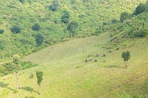 Farmland and livestock farming