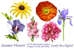 Isolated Summer Flowers Clip Art