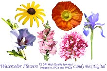 Watercolor Summer Flowers