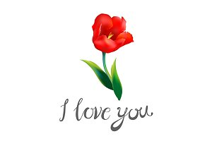 i love you red tulip flower