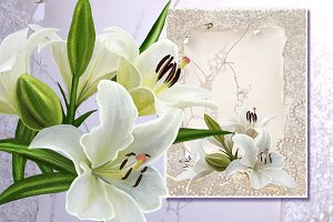 set of white lilies