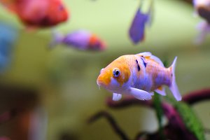Fish in an aquarium 4