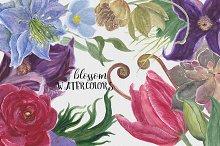 Blossom watercolors