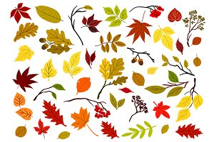 Autumnal leaves, berries and herbs