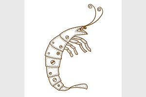 Hand drawn ornamental shrimp