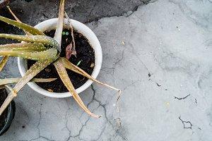 Garden Desert Plant