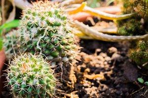 Desert Plants Macro