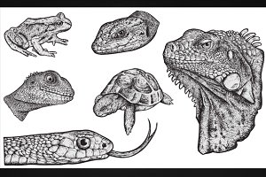 REPTILES - Hand Drawn