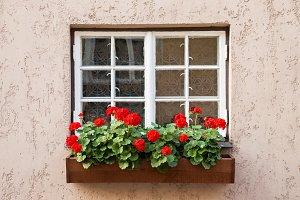 Window with Geranium flowers