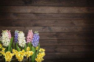 Spring flowers - hyacinth.