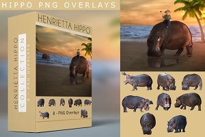 8 - PNG Hippo Overlays