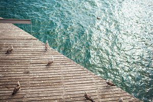 Wooden pier with seagulls
