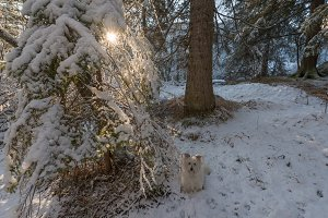 Dog in the winter forest