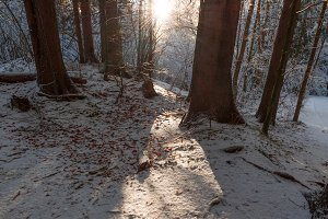 Sunlight in the winter forest