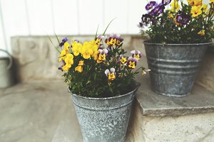 Metal buckets with flowers