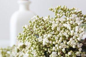 white flowers on the desktop