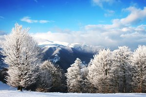 Sunshine winter Scenics