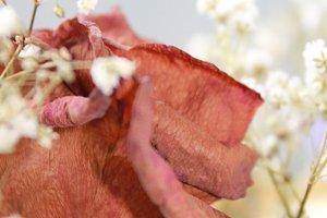 Dehydrated Floral Arrangement