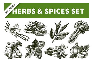 Hand Drawn Sketch Herbs & Spices Set