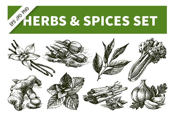 Hand Drawn Sketch Herbs & Spices Se…