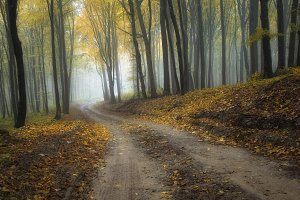 Road trough autumn forest