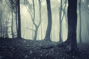 Forest with fog trough trees