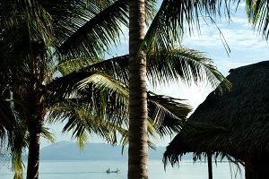 hut sea palms