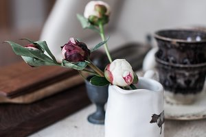 Peony Buds in Vintage Store