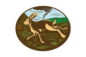 Wild Hare Rabbit Running Oval