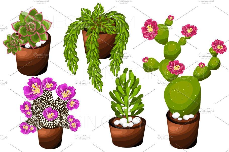 Wedding Succulents Floral clipart