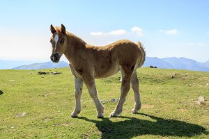 Foal on a sunny day