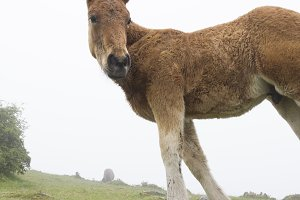Foal on a misty day