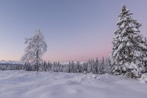 Before sunrise in the winter forest