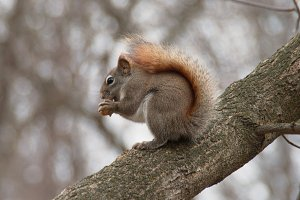 Cute squirrel sitting on the tree
