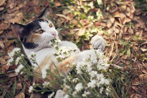Calico loves flower