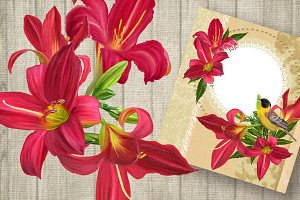 Set. Flowers red lily.