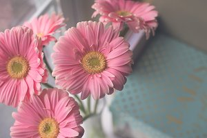 Daisies by the window