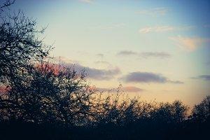 Peach Dusk (Photo)