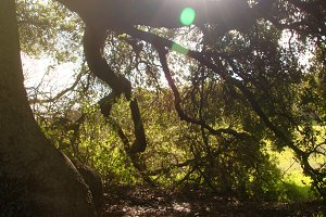Sunlight Through Branches (Photo)