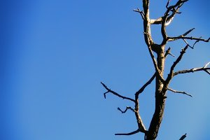 Bare Branch and Blue Sky (Photo)