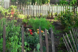 Garden (Photo)