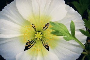 White and Yellow Flower (Photo)