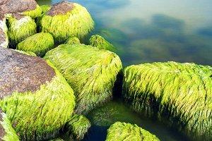Mossy seashore stones