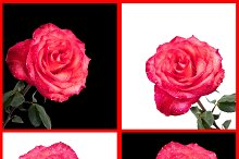Set 20 photos of red roses